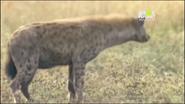 UTAUC Hyena
