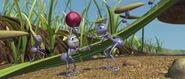 Bugs-life-disneyscreencaps.com-317