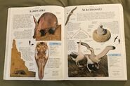 DK Encyclopedia Of Animals (35)