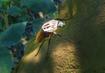 Goliath-beetle-planet-zoo