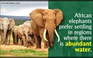 Habitat of African Elephants