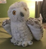 Icy the Snowy Owl
