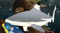 MSB Rides Again Shark