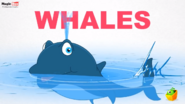 MagicBox Whale