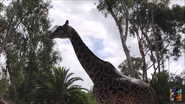 Oh Shitake Mushrooms Giraffe