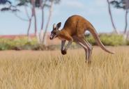 Red-kangaroo-planet-zoo
