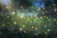 Sparkle of Fireflies
