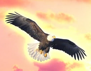 TTG Eagle