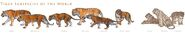 Tiger Subspecies by tardiscat