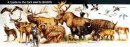 YNP Animals