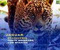 AFO Jaguar