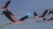 Batw 007 flamingos