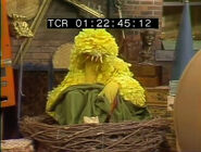 Big Bird takes a post-lunch nap