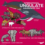 Elephants Hyraxes Manatees Okapis Hippopotamuses Camels Wildebeest Dolphins Whales Goats Buffalos Bison Warthogs Giraffes Zebras Horses Tapirs Rhinoceroses Donkeys
