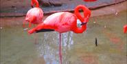 Fresno Zoo Flamingo