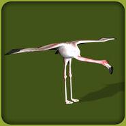 Greater Flamingo (Blue Fang)