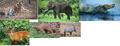 Moschops Asian animals