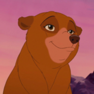Nita-bear
