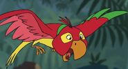 Red-Yellow-Green-Bird-jungle-book-2