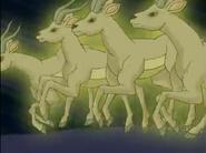 WNSB Gazelles