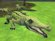 Zt2-nilecrocodile