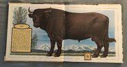 Gone Forever! An Alphabet of Extinct Animals (1)