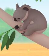 LTWR Koala