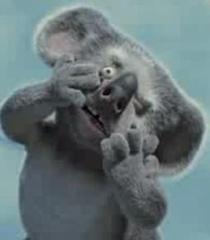 Nigel the Koala