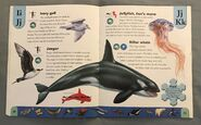 Polar Animals Dictionary (12)