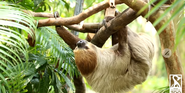 Rodger Williams Park Zoo Sloth