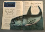 Sea Creatures (Over 100 Questions and Answers to Things You Want to Know) (14)