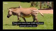 The Zoo Zebra