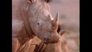 Tough Rhinoceros Fast Cheetah