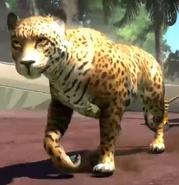 Central-american-jaguar-zootycoon3