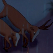 Fantasia 2000 Roe Deer