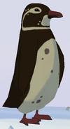 Galapagos Penguin WOZ
