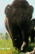 Preposterous Pets Elephant