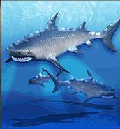 Tiger Shark ZT