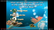Animal Atlas Beluga Whale Arctic Fox Penguin Walrus Clownfish and Bluefin Tuna
