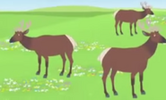 Elk.jpeg