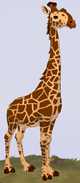 Reticulated Giraffe WOZ