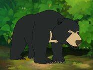 Rileys Adventures Sun Bear