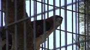 Rolling Hills Zoo Hawk