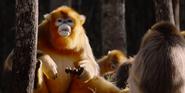 BIC Monkeys