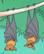 Batw 012 flyingfox