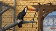 Columbus Zoo Toucan V2