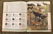 Fantastic World of Animals (43)