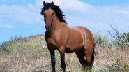 Mustang (Horse)