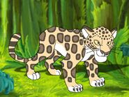 Rileys Adventures Parana Jaguar