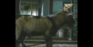 Scout's Safari Goat